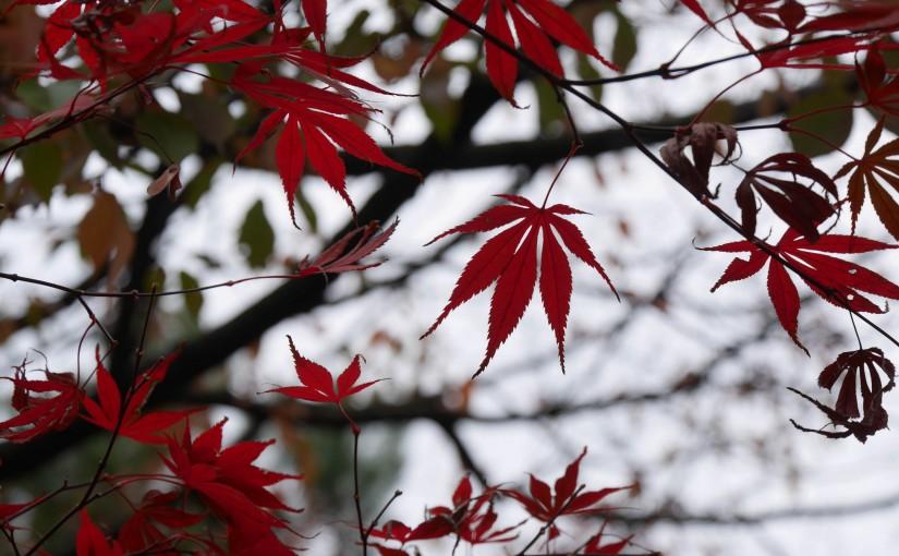 秋の兼六園